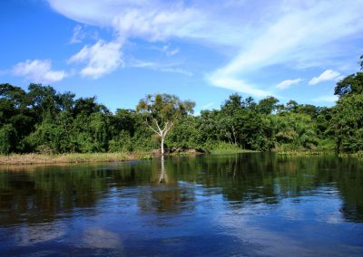 ORI-30-PANTANAL-DO-MIRANDA-ALAGADO-PANTANAL-OF-MIRANDA-SWANP-WET-SEASON