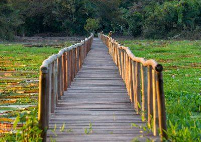 Pantanal51