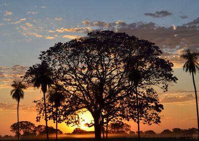 SOS-Pantanal